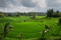 img churchyard-Paddy-Field-On-Bali-license-free-CC0.jpg