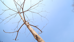 img haggerhermy-bare_branches1.png