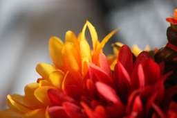 img grundblom-orange_silk_flowers.png