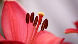 img vtuli77-CloseUp_Flower.png
