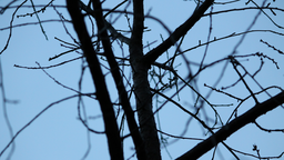 img artchizhov-Branches.png