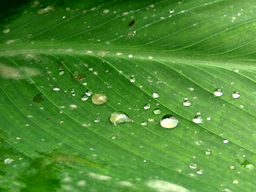 img suraj353-droplet_on_leaf.png