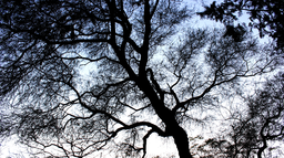 img vtuli77-The_Tree_Silhouette.png